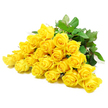 YELLOW ROSES 2